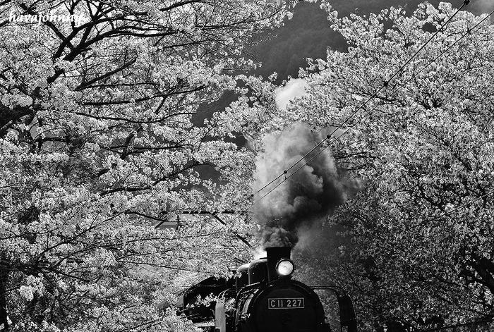 桜は散っても続くよ何処までも・・・_c0173762_21155735.jpg