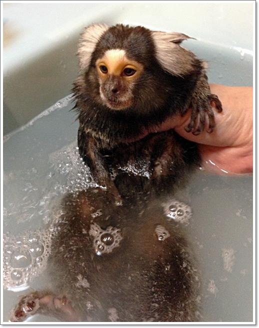 最近、お風呂に入れるのも大変に・・・・_e0142065_21122864.jpg