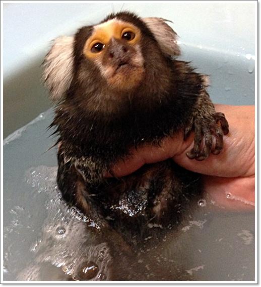 最近、お風呂に入れるのも大変に・・・・_e0142065_21132578.jpg