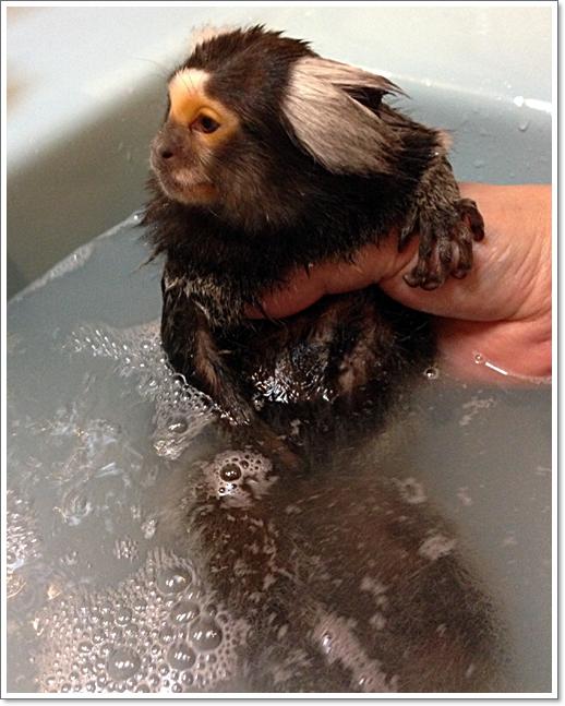 最近、お風呂に入れるのも大変に・・・・_e0142065_21164711.jpg