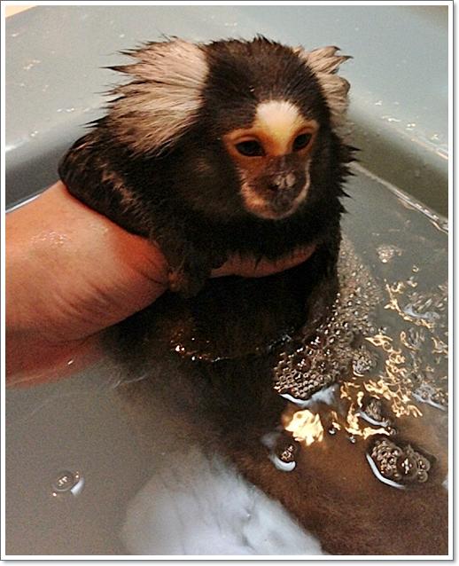 最近、お風呂に入れるのも大変に・・・・_e0142065_21172583.jpg