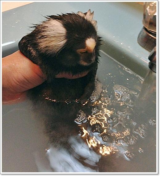 最近、お風呂に入れるのも大変に・・・・_e0142065_21182487.jpg