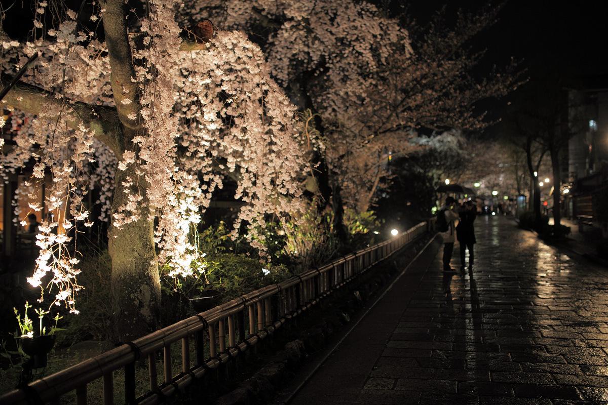 桜 2013 <京都 祇園白川> _f0021869_22413011.jpg
