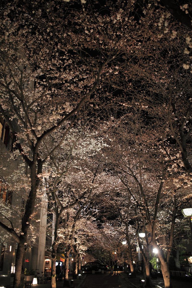 桜 2013 <京都 祇園白川> _f0021869_22414026.jpg