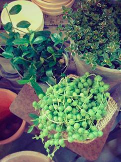 晴れる、はるのマーケット in KURU _b0209477_13513183.jpg