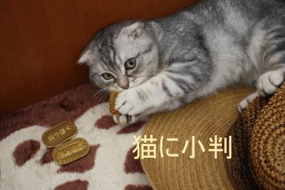 猫に小判。。_c0178104_19305310.jpg