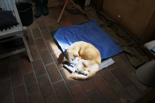 犬との別れ_f0160407_5304355.jpg