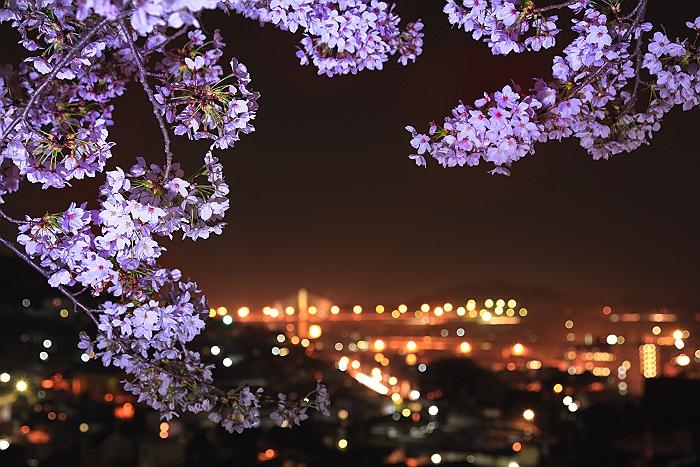 """尾道 """"西国寺ライトアップ"""" 続編_a0140608_751547.jpg"""