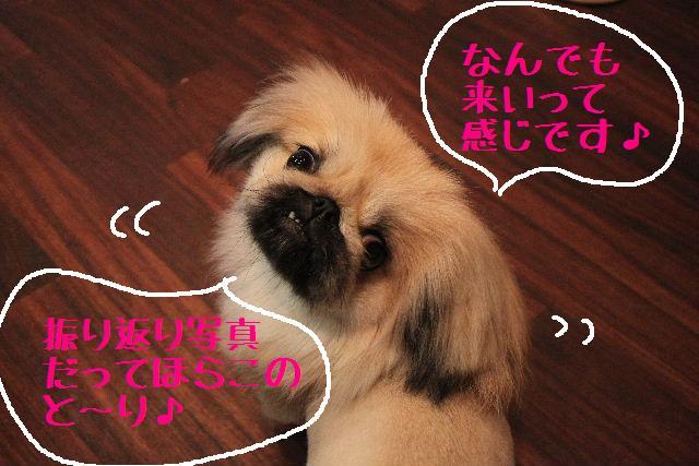 こんにちわぁ~♪_b0130018_1040235.jpg