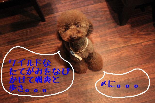 こんにちわぁ~♪_b0130018_10423476.jpg