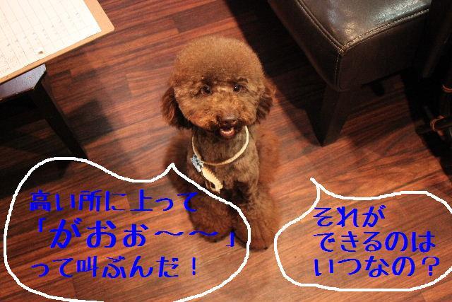 こんにちわぁ~♪_b0130018_10424062.jpg
