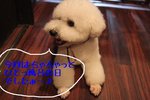 こんにちわぁ~♪_b0130018_10451951.jpg