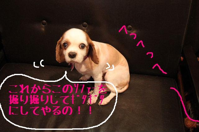 こんにちわぁ~♪_b0130018_1051535.jpg