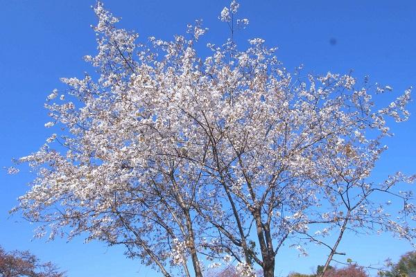 若葉の季節_f0214527_10235928.jpg