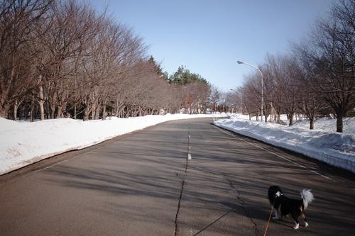 札幌市は積雪ゼロ宣言なんだけど。_c0051132_20161016.jpg
