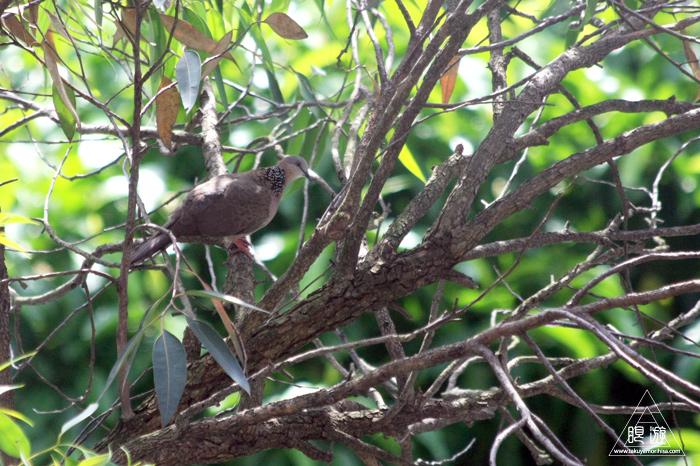 172 台北 ~台湾の野鳥~_c0211532_23568.jpg