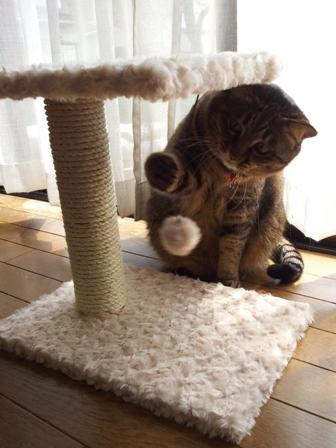 【ゆきねこ雑貨店】まるまるふわふわキャットタワー猫 空しぇる編。_a0143140_19594578.jpg