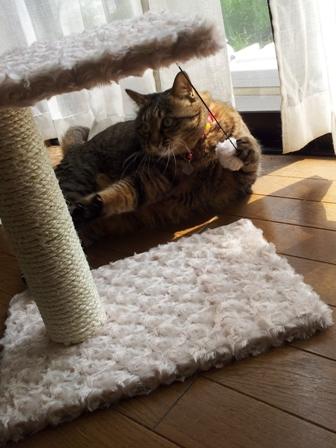 【ゆきねこ雑貨店】まるまるふわふわキャットタワー猫 空しぇる編。_a0143140_2021036.jpg
