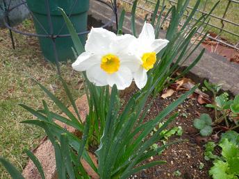 春の訪れです。_a0139242_5525890.jpg