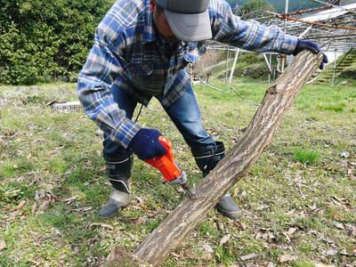 原木しいたけのコマ打ち作業やってみました(株式会社旬援隊編その2)_a0254656_1823119.jpg
