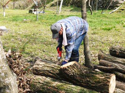 原木しいたけのコマ打ち作業やってみました(株式会社旬援隊編その2)_a0254656_1832173.jpg