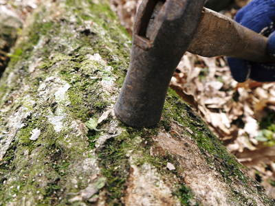 原木しいたけのコマ打ち作業やってみました(株式会社旬援隊編その2)_a0254656_18584252.jpg