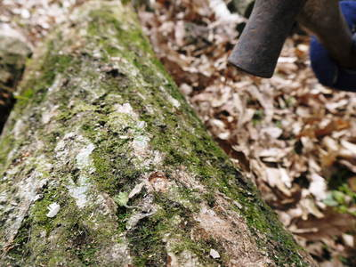原木しいたけのコマ打ち作業やってみました(株式会社旬援隊編その2)_a0254656_1901245.jpg