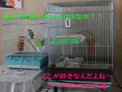 b0158061_22182321.jpg