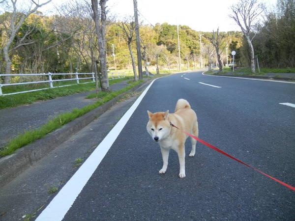 '13,4,12(金)今年のテーマカラーは濃桃色~!_f0060461_1543076.jpg