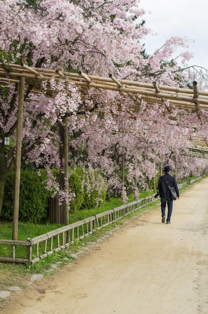 「今年最後の桜巡り~2013~Part3」_a0133692_16293662.jpg