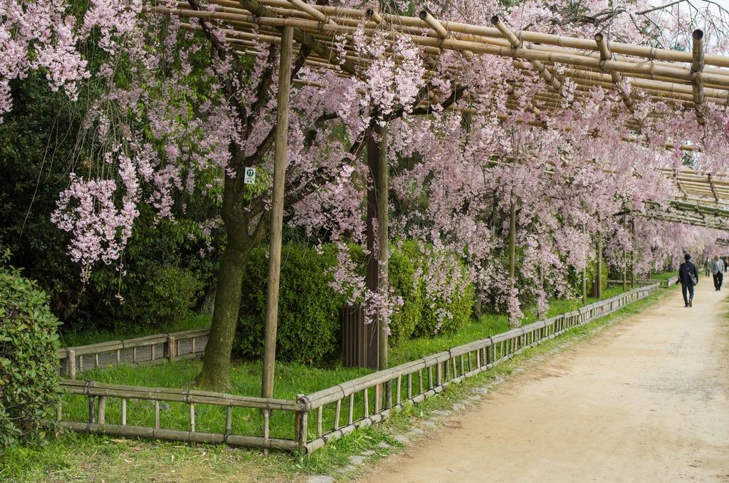 「今年最後の桜巡り~2013~Part3」_a0133692_16301593.jpg