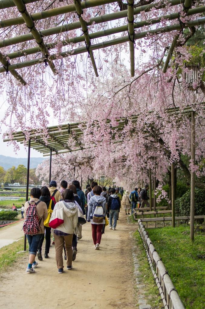 「今年最後の桜巡り~2013~Part3」_a0133692_16341512.jpg