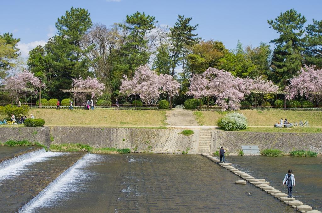 「今年最後の桜巡り~2013~Part3」_a0133692_16514258.jpg