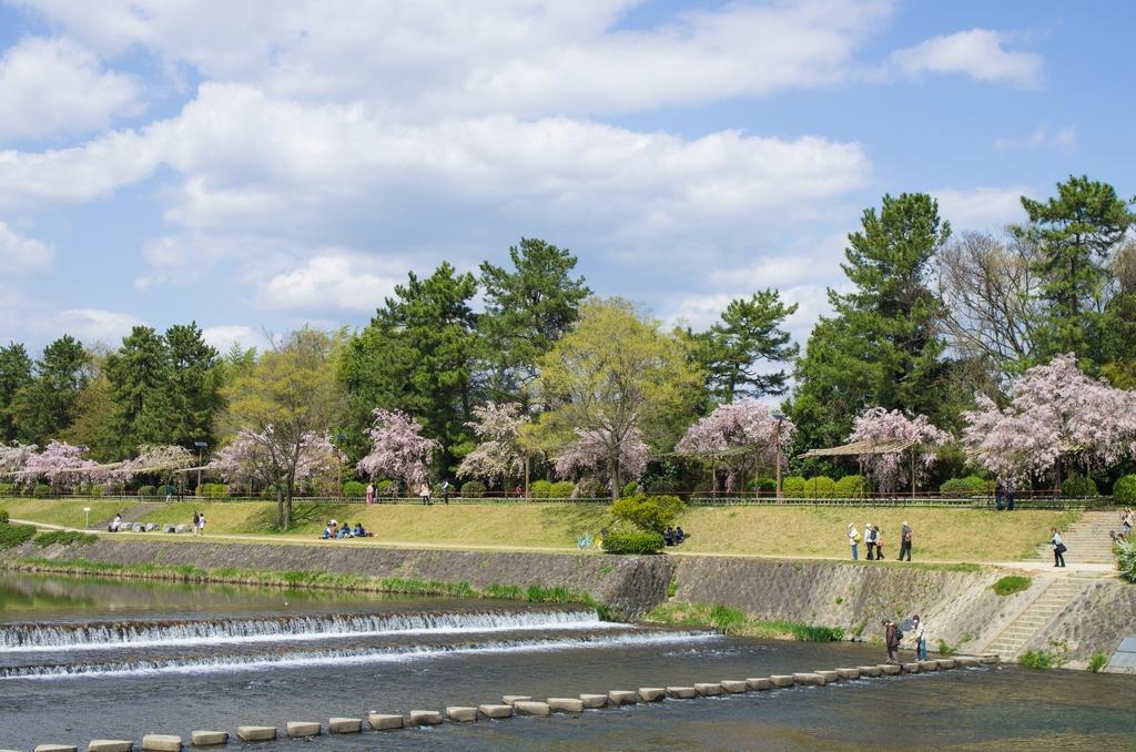 「今年最後の桜巡り~2013~Part3」_a0133692_1651880.jpg
