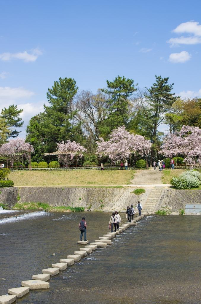 「今年最後の桜巡り~2013~Part3」_a0133692_16521537.jpg