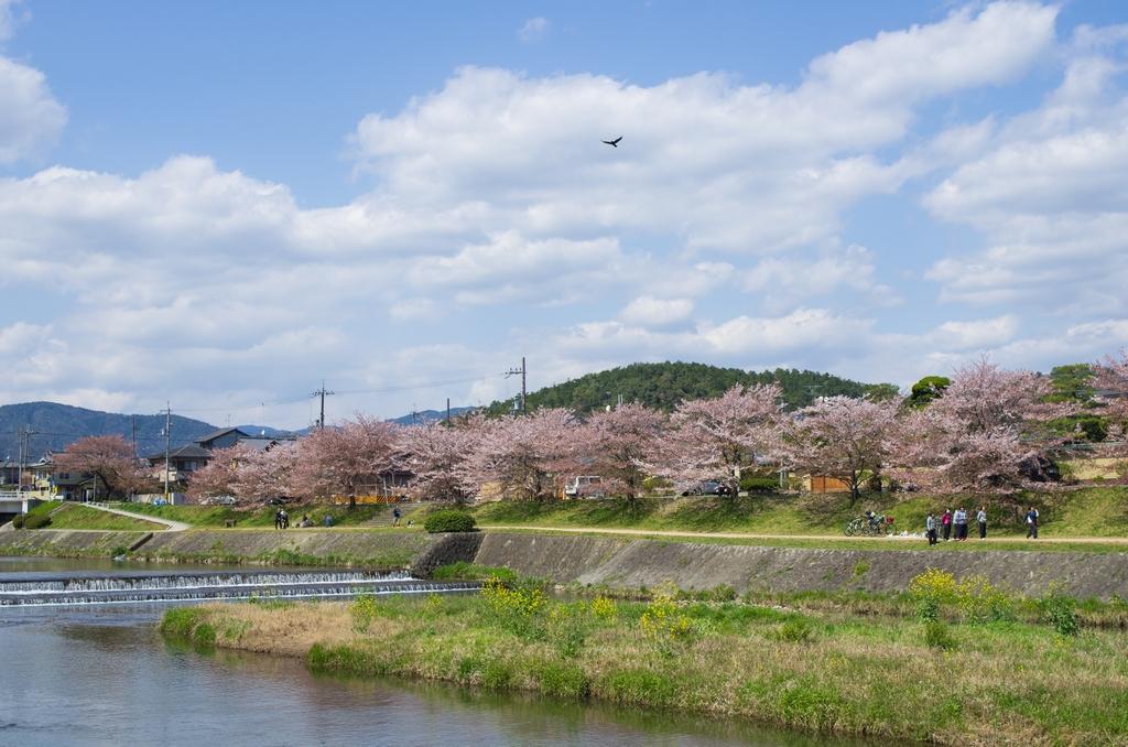 「今年最後の桜巡り~2013~Part3」_a0133692_16564267.jpg