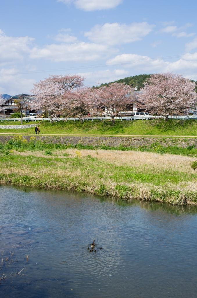 「今年最後の桜巡り~2013~Part3」_a0133692_16574093.jpg