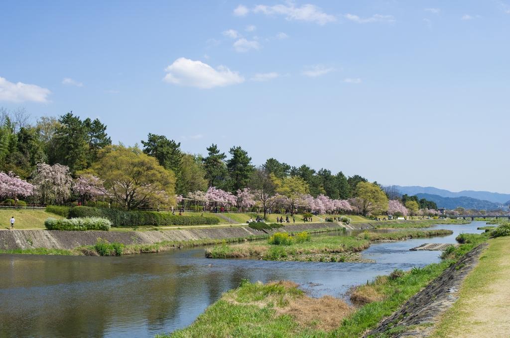 「今年最後の桜巡り~2013~Part3」_a0133692_171542.jpg