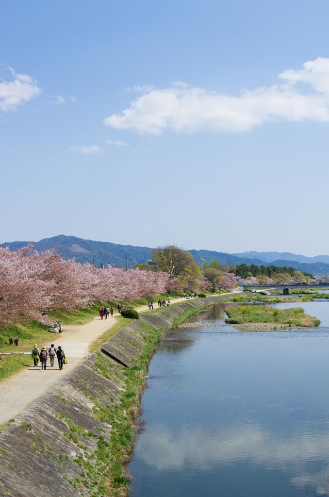 「今年最後の桜巡り~2013~Part3」_a0133692_17273.jpg