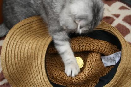 猫に小判2。。_c0178104_1732052.jpg