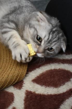 猫に小判2。。_c0178104_1745558.jpg