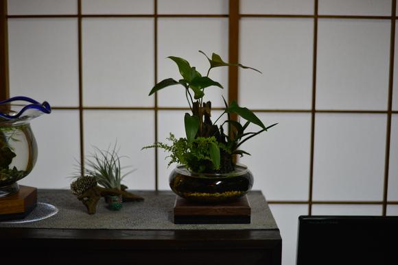 KATOSUISOふたたび_a0262622_2356591.jpg