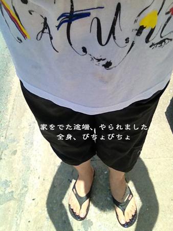 d0042827_1750571.jpg