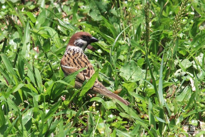 172 台北 ~台湾の野鳥~_c0211532_2244407.jpg