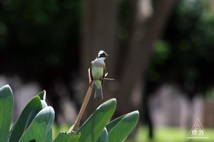172 台北 ~台湾の野鳥~_c0211532_22454876.jpg