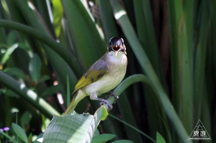 172 台北 ~台湾の野鳥~_c0211532_22475934.jpg