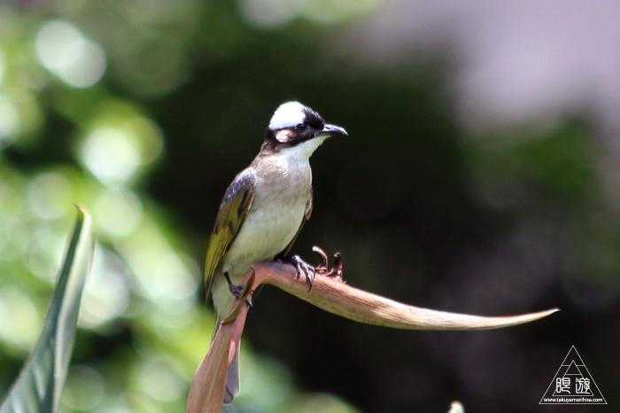 172 台北 ~台湾の野鳥~_c0211532_22481143.jpg