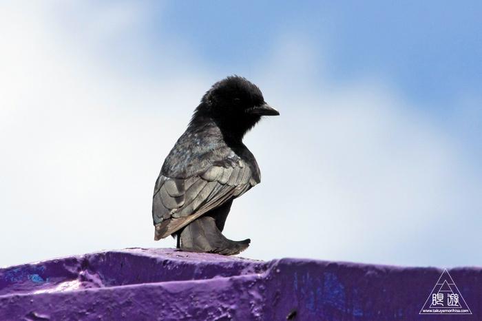 172 台北 ~台湾の野鳥~_c0211532_2250965.jpg