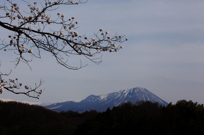 山陰紀行 6 (2013 桜 岡成池)_a0294534_19535192.jpg