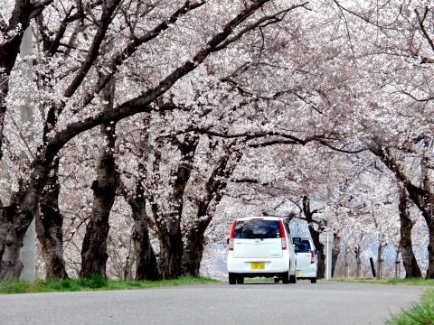 お花見 長野市内_a0023246_17531117.jpg